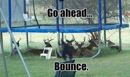 go ahead bounce trampoline funny