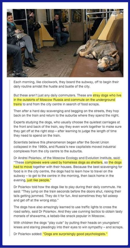 homeless dogs in Moscow - Tuesday oddities at PMSLweb.com