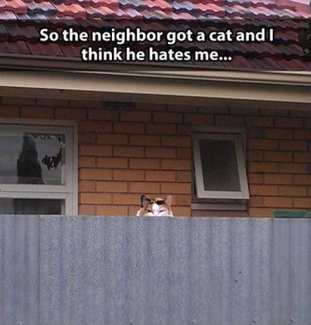 the neighbors cat hates me