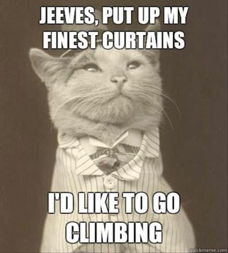 put up my finest curtains cat meme