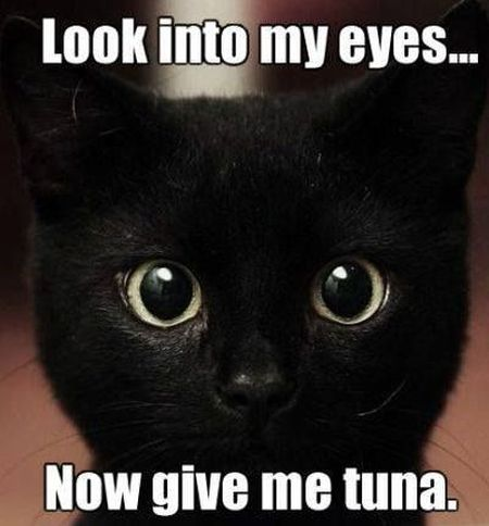 look into my eyes cat meme