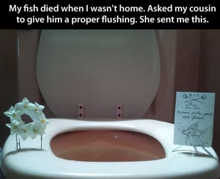 my fish died when I wasn't at home funny