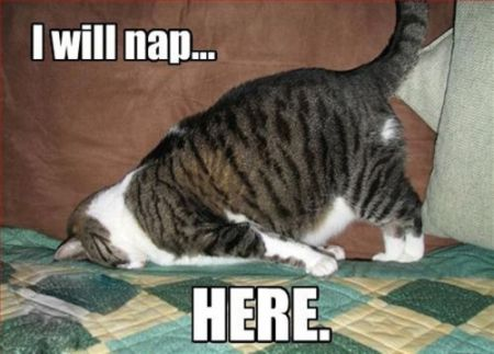 I will nap here cat meme