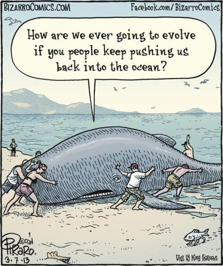 whales how are we going to evolve funny cartoon