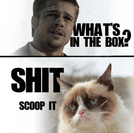 Brad Pitt and grumpy cat meme