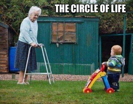 the circle of life funny