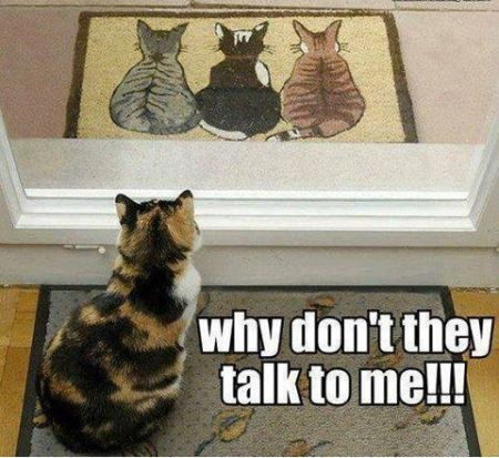 why don't they talk to me cat funny