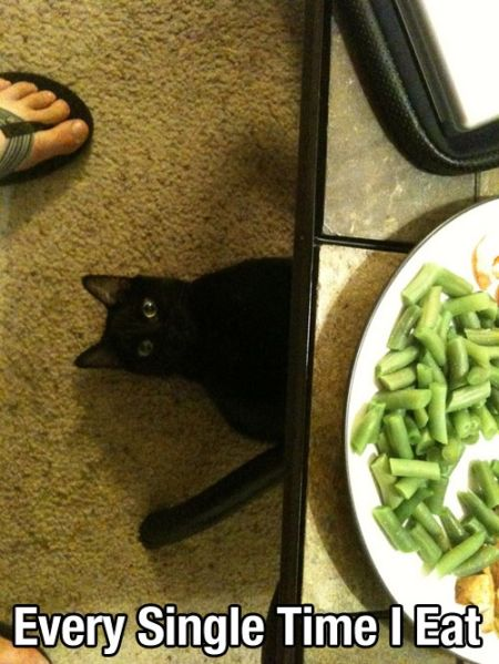 every single time I eat cat funny