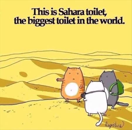 this is sahara toilet cat cartoon