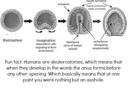 we all started as an anus