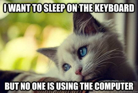 I want to sleep on the keyboard cat meme