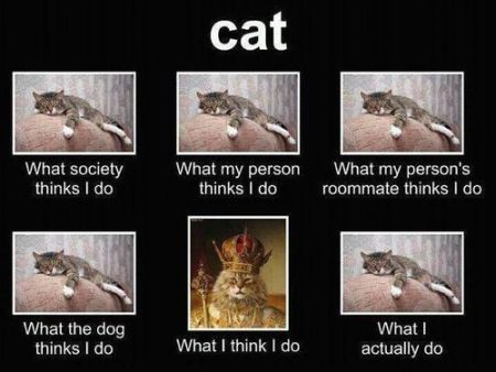 cat what I actually do