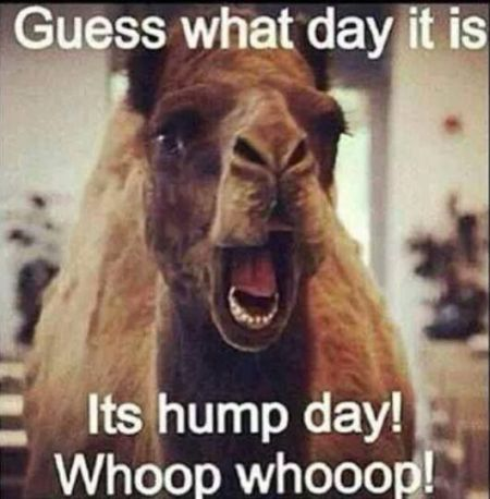 guess what day it is hump day
