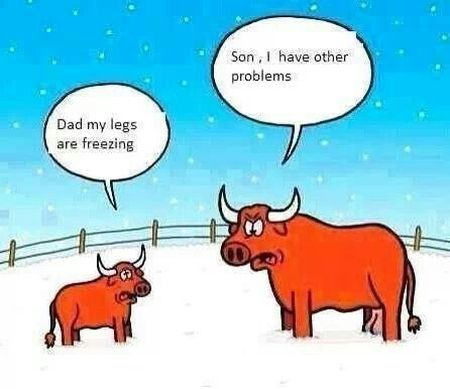 1-bull-and-son-in-snow-cartoon  PMSLweb