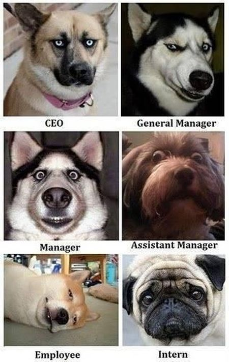 Different work positions dogs