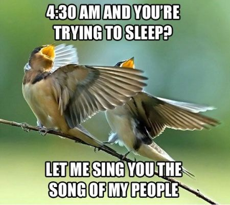4.30am and you're trying to sleep bird meme