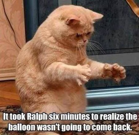 it took Ralph 6 minutes to realize cat meme