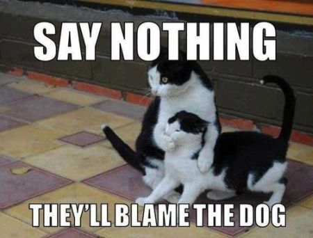 say nothing they'll blame the dog cat meme