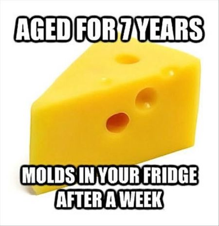 cheese – molds in my fridge after a week