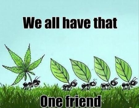 we all have that one friend pothead