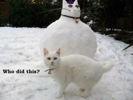 who did this cat snowman funny