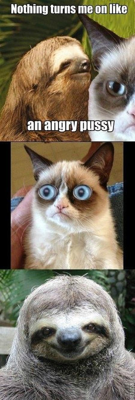 nothing turns me on like a grumpy cat