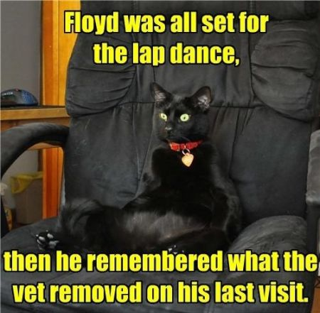 Floyd was all set for the lapdance cat funny