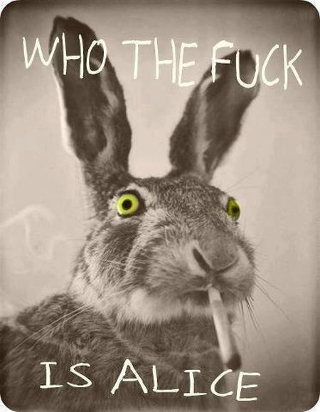 rabbit who the f*ck is alice
