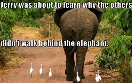 why the others didn't walk behind the elephant meme