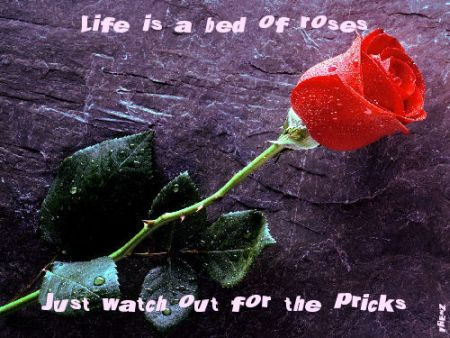 life is a bed of roses just watch out for the pricks