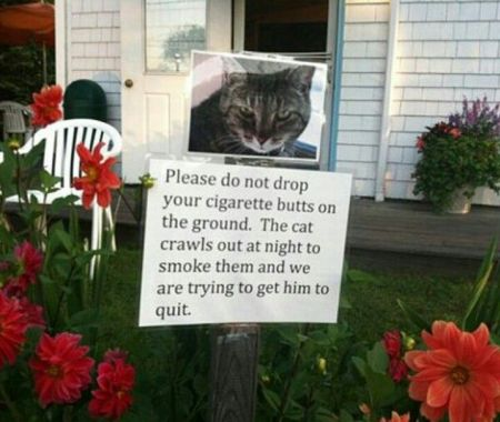 trying to get the cat to quit smoking