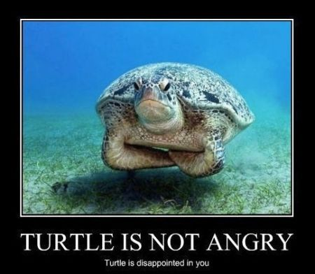turtle is not angry demotivational