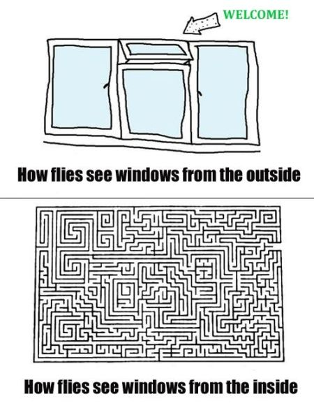 how flies see windows funny