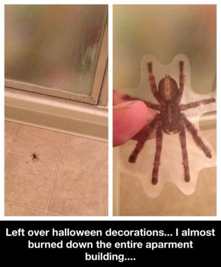 spider Halloween decoration funny