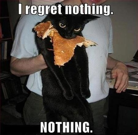 4 I Regret Nothing Cat Meme Pmslweb