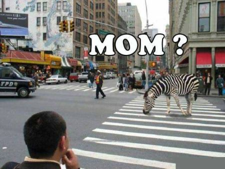 zebra crossing meme