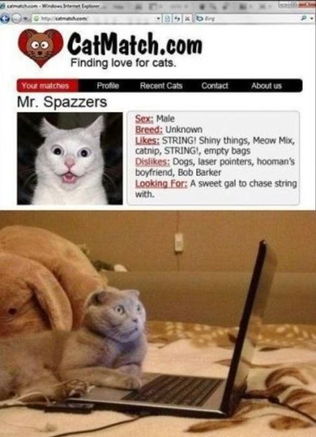 Catmatch dating site for cats – Friday laughter at PMSLweb.com