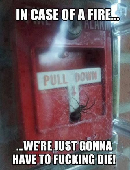 In case of a fire spider meme - Monday fun at PMSLweb.com