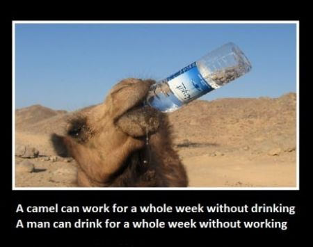Camel humor - Friday funnies at PMSLweb.com