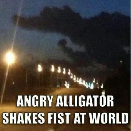 Angry alligator shakes fist at the world at PMSLweb.com