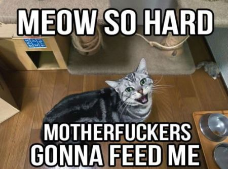 Meow so hard cat meme at PMSLweb.com