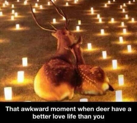 When a deer has a better love life than you at PMSLweb.com