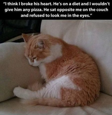 broken hearted cat