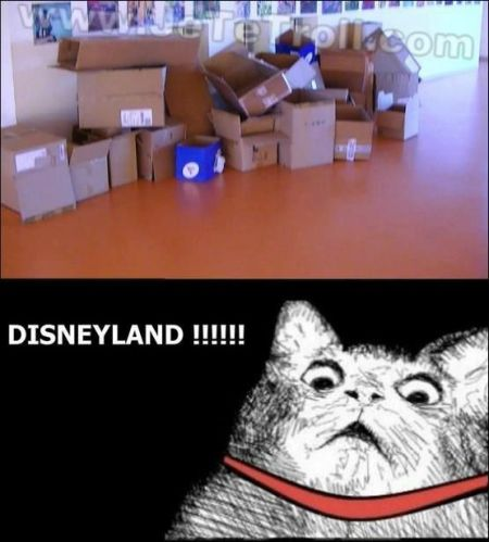 Cat Disneyland meme at PMSLweb.com