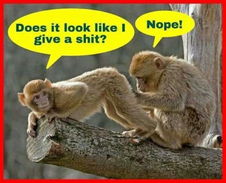 Does it look like I give a sh*t monkey humor - Tuesday giggles at PMSLweb.com