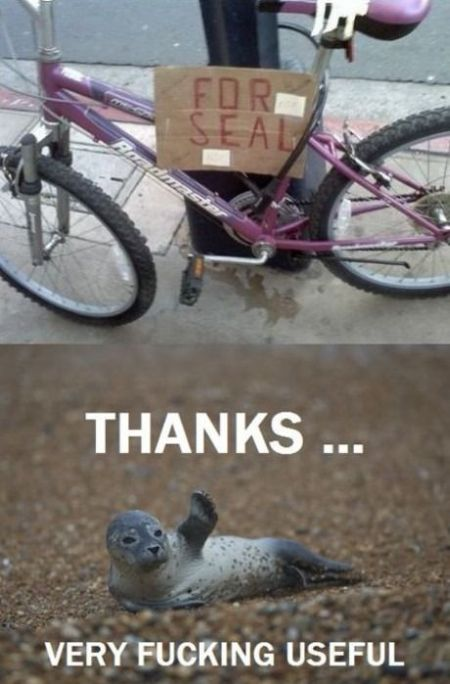 Bike for seal meme - Sarcastic pictures at PMSLweb.com