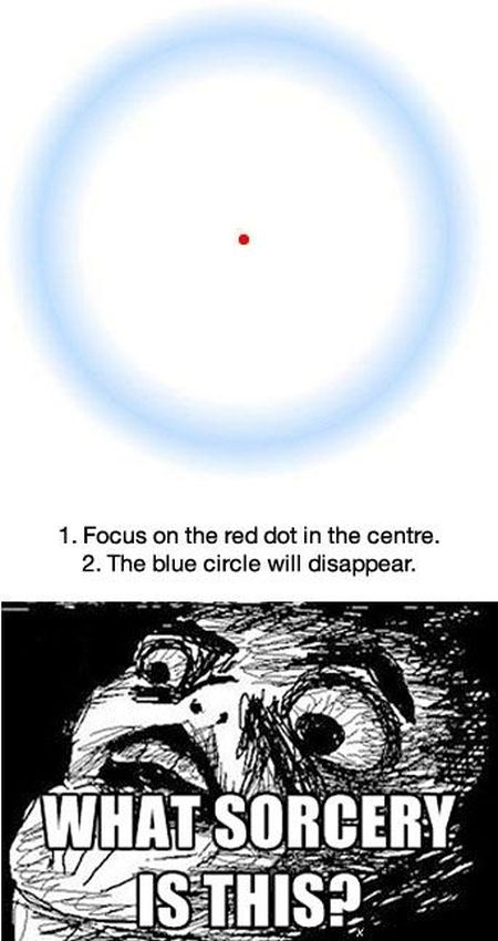 Focus on the red dot -  Hump Day funnies at PMSLweb.com