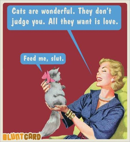 Cats are wonderful blunt card - Funny picture at PMSLweb.com