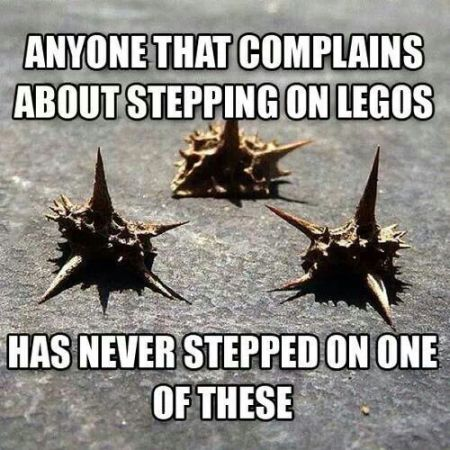 Stepping on one of these meme - Tuesday giggles at PMSLweb.com