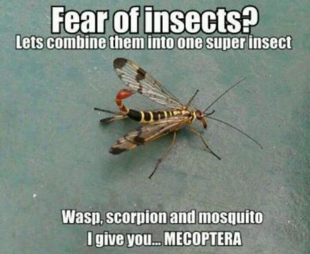 Fear of insects humor – Funny Sunday pics at PMSLweb.com